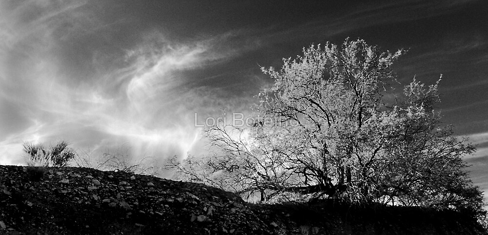 tree and sky by Lori Botelho