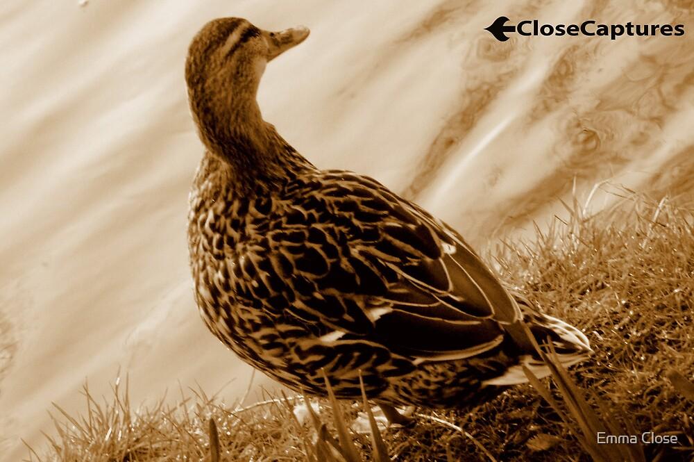 Female Duck in Sepia by Emma Close