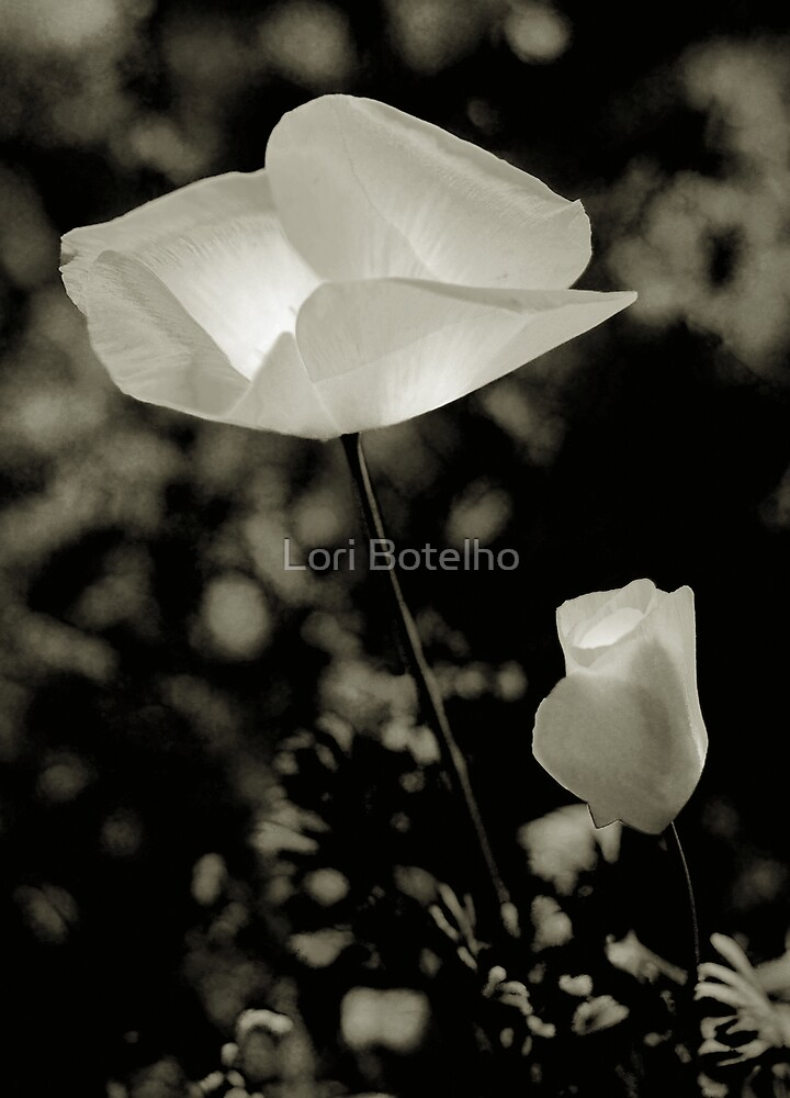 poppy in b/w by Lori Botelho