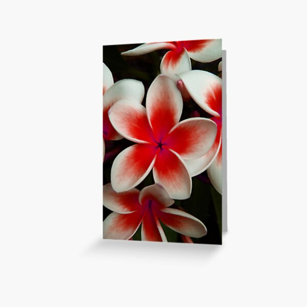 Frangipani Red Greeting Card
