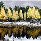 Tamarack Under a Painted Sky by Wayne King