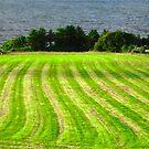 Sunlit Field, Donegal, Ireland by Shulie1
