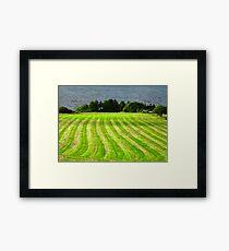 Sunlit Field, Donegal, Ireland Framed Print