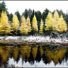 First Snow on a Larch Bog by Wayne King