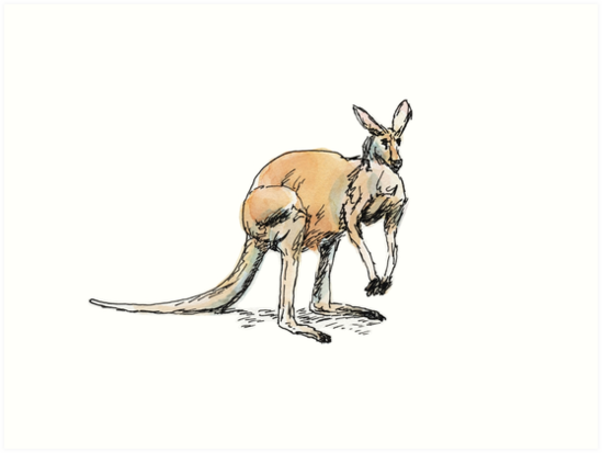 Kangaroo-in-waiting by Dan Tabata