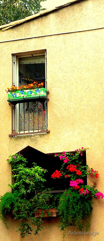 window box by AidensImage