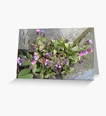Lungwort Greeting Card