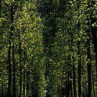 Morgano,Italy by Rosina  Lamberti