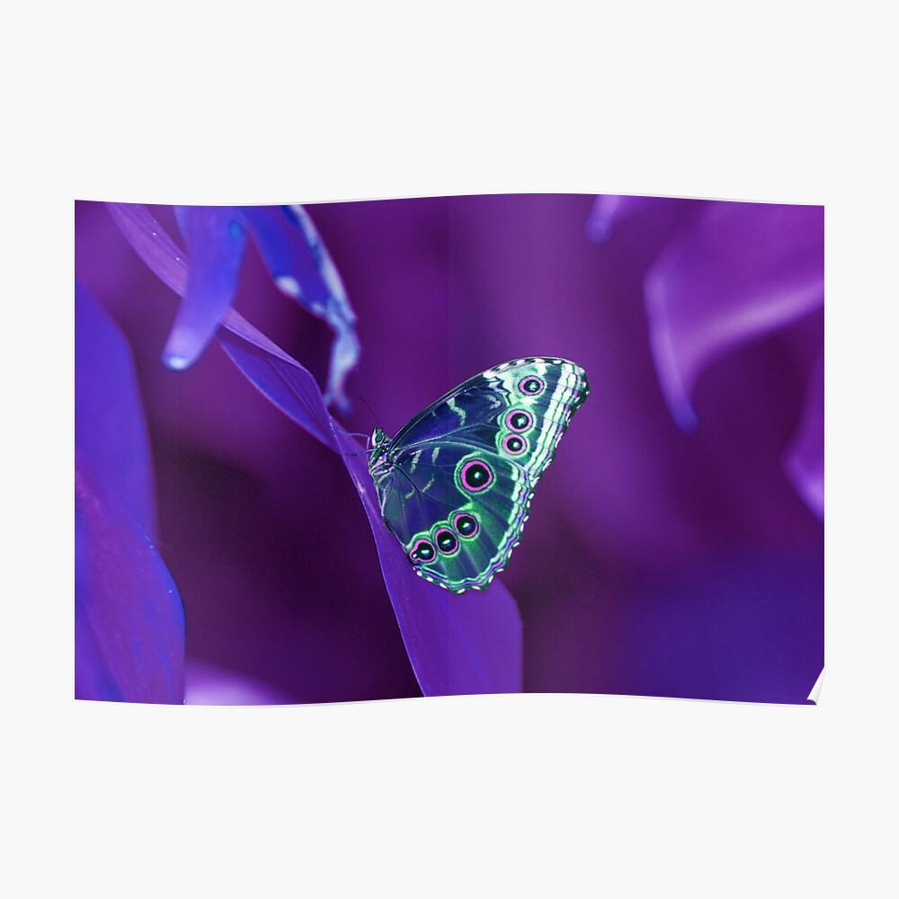 Purple Atmosphere  Poster