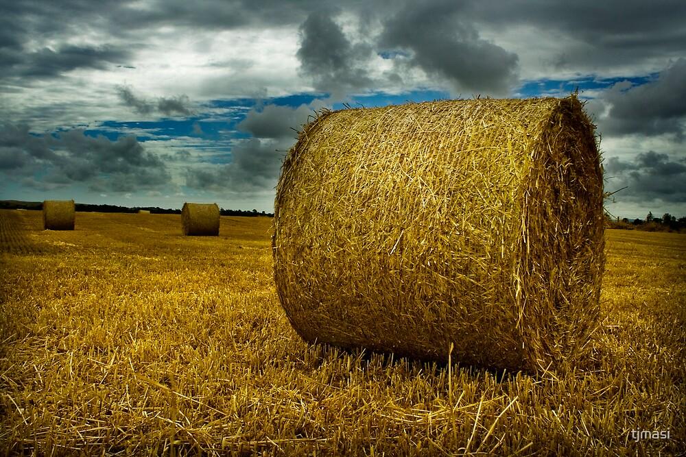 a bundle of hay by tjmasi