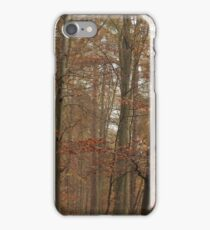 Beech trees in splendid fall color iPhone Case/Skin