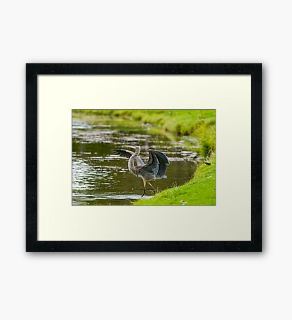 Hey look at me!! - Ottawa, Ontario Framed Print
