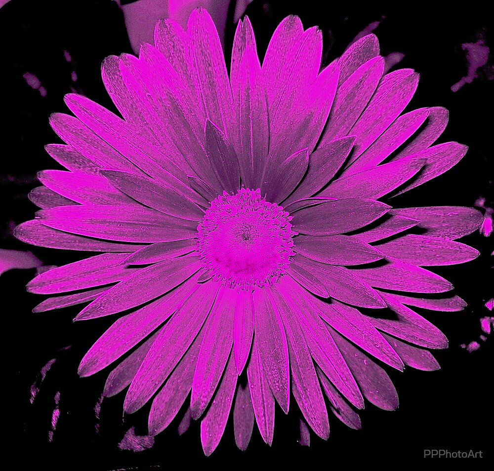 Hot Pink by PPPhotoArt