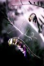 Vetching Purple by Karri Klawiter