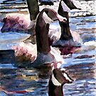 Gaggle of Geese by Jim Phillips