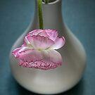 Ranunculus in a Vase by Ann Garrett