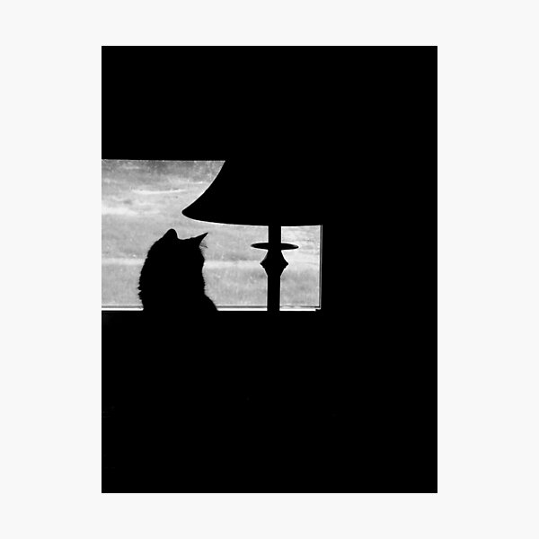 Kitty in the window Photographic Print