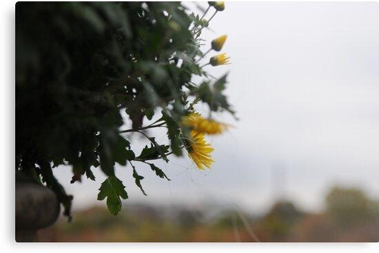 Flowers in a Parisian Fall by trulyshannon
