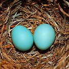 Nature's Easter Basket by Bonnie T.  Barry