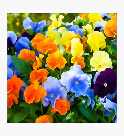 Painted Pansies Photographic Print