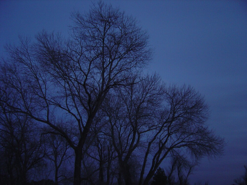 Night Trees by Jerry Stewart
