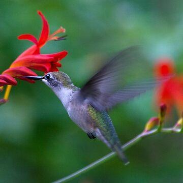 Hummingbird & Crocosmia  by VeganBear