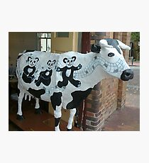 Panda Cow? Photographic Print