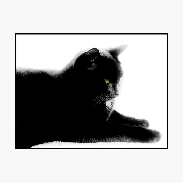 Cat relaxing color select Photographic Print