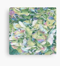 Abstract - Hydranga - Green, Pink & Blue Canvas Print