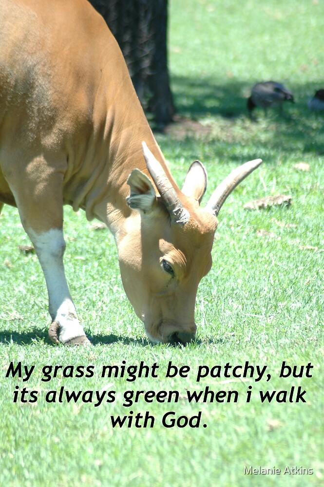 My grass by Melanie Atkins