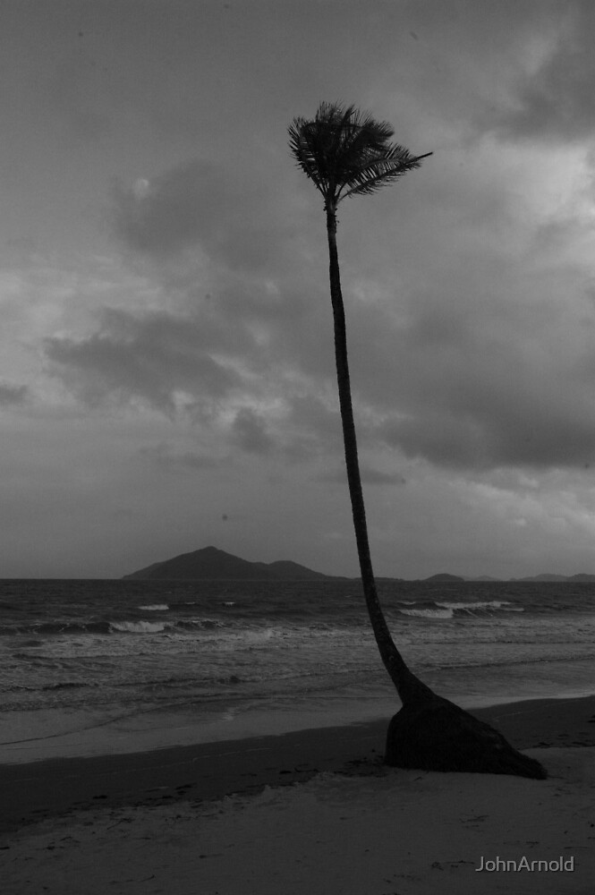 Mission Palm by JohnArnold