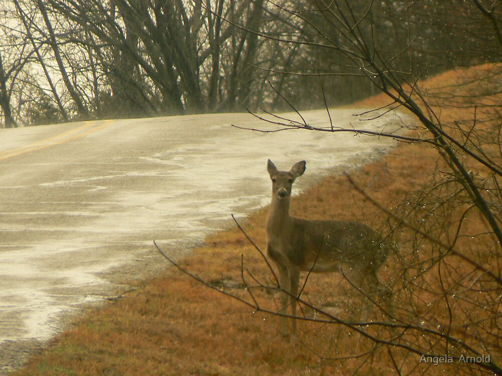 deer in day by Angela  Arnold