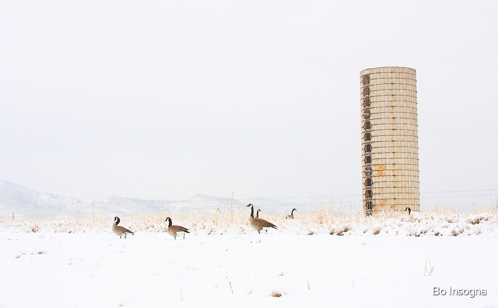 Geese on the farm with Snow by Bo Insogna
