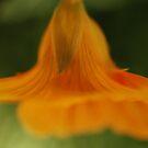 nasturtium bell by brilightning