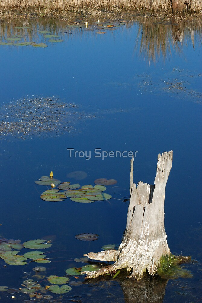 lilypads and stump by Troy Spencer