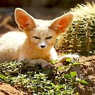 Fennec  Fox by cs-cookie