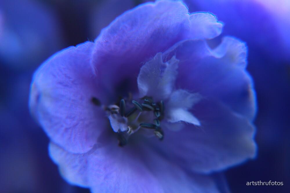 Deep Blue by artsthrufotos