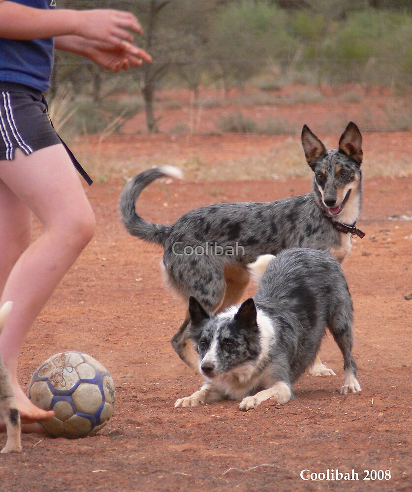 Soccer time by Ruth Anne  Stevens