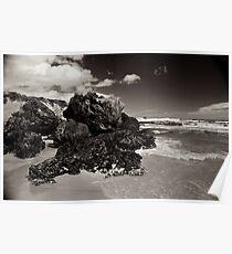 Osmiridium Beach Gulls 1 Poster