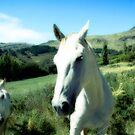 Horse Friends by kaneko