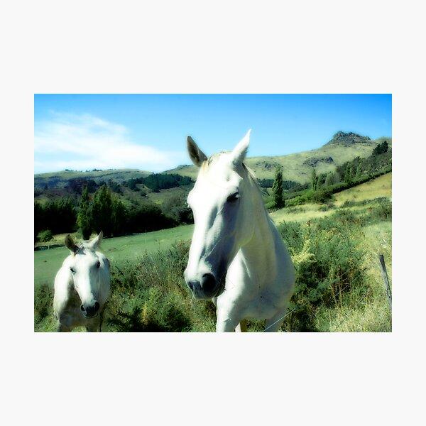Horse Friends Photographic Print