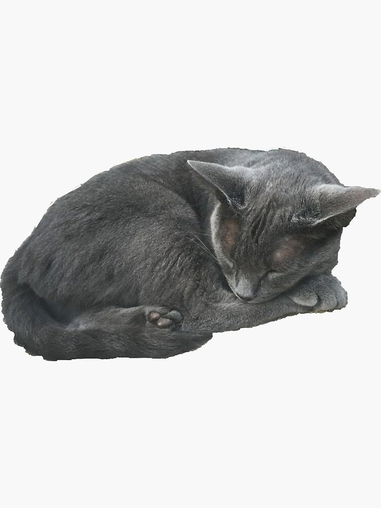 Grey Cat Sleeping by abbylynch28