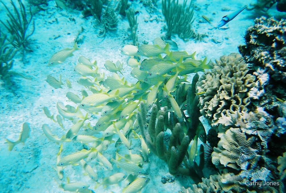 Cozumel Reef by Cathy Jones