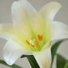 Easter Lily by Lorelle Gromus