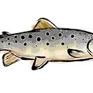Brown Trout by ZTLG