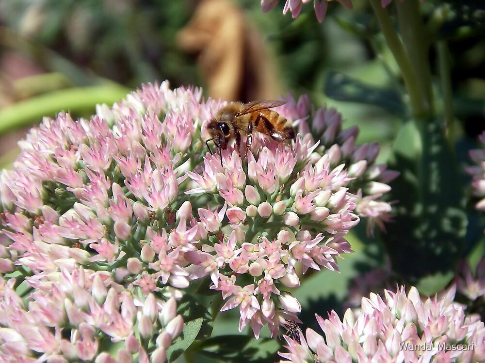 Cute Honeybee          by Wanda  Mascari