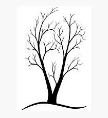 A Two-trunked Tree Photographic Print