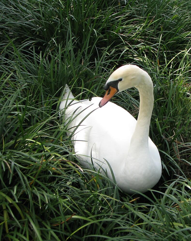 White Swan by Rebecca Cruz