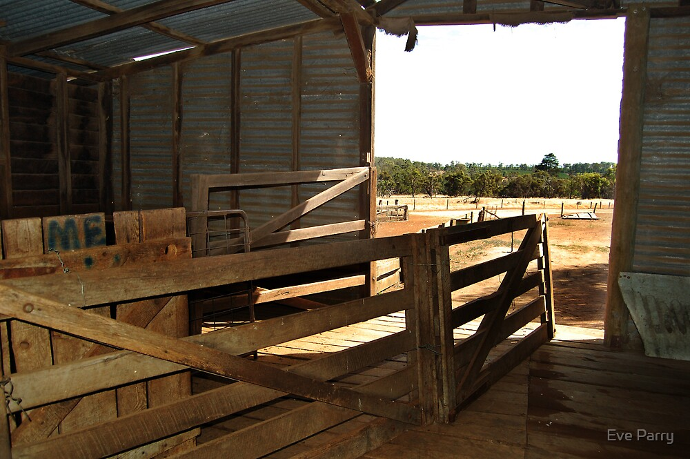 Inside Shearing Shed by Eve Parry