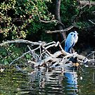 Ruswarp, and the elusive herons by dougie1